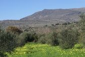 Mediterranean agricultural land or field in Spring season — Fotografia Stock
