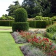 Herbaceous border and yew topiary in a garden — Stock Photo #68873571