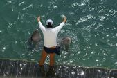 Dolphin training. woman training dolphins — Stock Photo