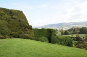 Yew topiary hedge of a garden. Powis castle garden in Powys, Welshpool, Wales, England — Stock Photo