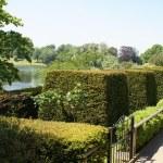 Yew topiary garden. Culpeper Garden at Leeds castle in Kent, England — Stock Photo #73793079