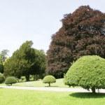 Yew topiary garden — Stock Photo #78878334