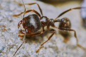 Ant outside in the garden — Stock Photo