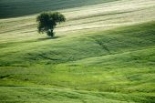 Tuscany landscape near Pienza, Val d'Orcia Italy — Stock Photo