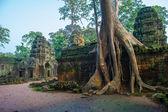 Ta prohm chrám angkor, kambodža — Stock fotografie