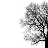 Black silhouette of tree — Stock Vector