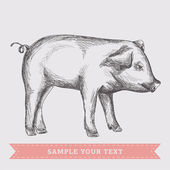 Pig illustration — Stock Vector