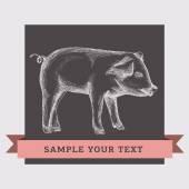 Ilustracja świnia — Wektor stockowy