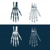 Set of skeleton hands — Vector de stock