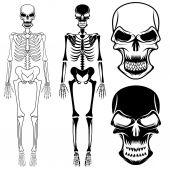 Set of skeletons and skulls — Stock Vector