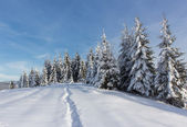 Winter Carpathians — Stock Photo