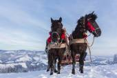 Team of horses in the winter mountains — Stock Photo