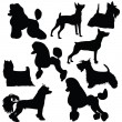 Set of silhouettes of standing decorative dogs — Stock Vector #53285961
