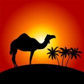 Silhuett av kamel på sunset bakgrunden — Stockvektor