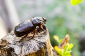 Beetle on the wood close up — Stock Photo