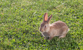 Little rabbits on the grass — Stock Photo
