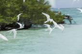 Sea gulls flying — Stock Photo