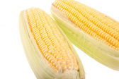Sweetcorn on white background — Stock Photo