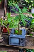 Recycling old televison into tree, Mexico — Stock Photo