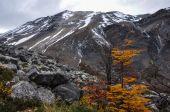Herfst vallen in parque nacional torres del paine, chili — Stockfoto