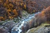 Autumn Fall in Parque Nacional Torres del Paine, Chile — Stock Photo