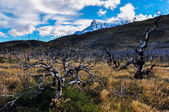 Parque Nacional Torres del Paine, Chile — Stock Photo