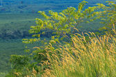 Native grasses and weeds as background image — Photo