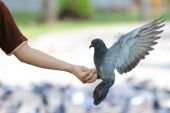 Pigeon on hand — Stock Photo