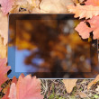 The reflection in the tablet lying on autumn leaves. — Stock Photo #57961613