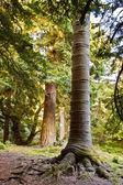 Saggy tree — Stock Photo