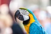 Retrato de um papagaio — Fotografia Stock