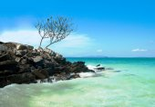 A lonely tree on the shore of the Andaman Sea — Stok fotoğraf