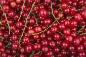 Background of redcurrant — Stock Photo
