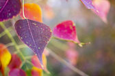 Background of beautiful different color of autumn leaf — Stock Photo