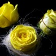 Three yellow roses on a black background — Stock Photo #53399369