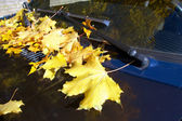 Yellow autumn leaves on car. — Stock Photo