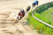 Three Greyhounds in a row — Stock Photo