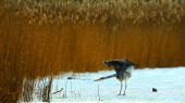 Heron — Fotografia Stock