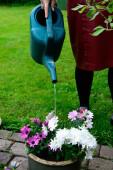 Rega flores mulher — Fotografia Stock