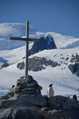 Little penguin by the side of the Christian cross on the ocean shore (Antarctica) — Stok fotoğraf