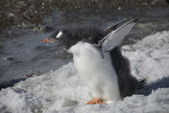 Young fluffy penguin on the shore (Antarctic) — 图库照片