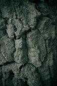 Robust Tree Texture — Stock Photo