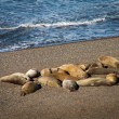 Group Of Sea Lions On Beach — Stock Photo #58910875