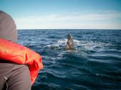 Right Whale Watcher — Stock Photo