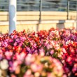 Differnt colour flowers — Stockfoto #56899719
