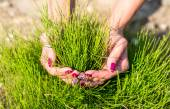 Fresh green grass growing, girl hold in hands — Stok fotoğraf