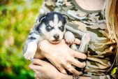 Pretty little husky puppy — Stock Photo
