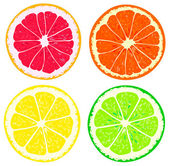 Four slices of citrus fruits — Vecteur