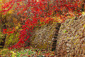 The stone wall that leads to the secret garden — Fotografia Stock