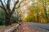 Autumn street view — Stock Photo